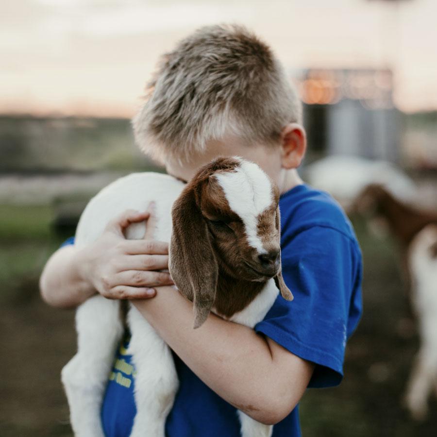 kid_goat